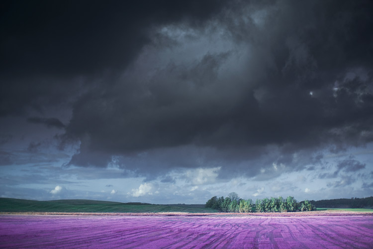 © Leonard Gren: Purple Fields